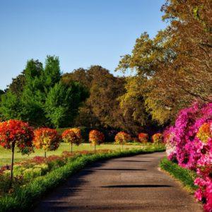 bushes-flora-flowers-158028